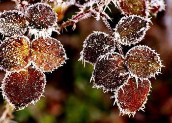 Pflanzen vor Frost schützen | Anleitung für Frostschutz