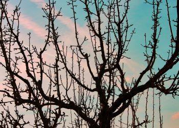 Bäume vor Frost schützen (Tipps) | Frostschutz für Obstbäume
