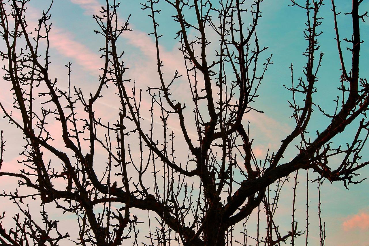 Winter Obstbaum Frost