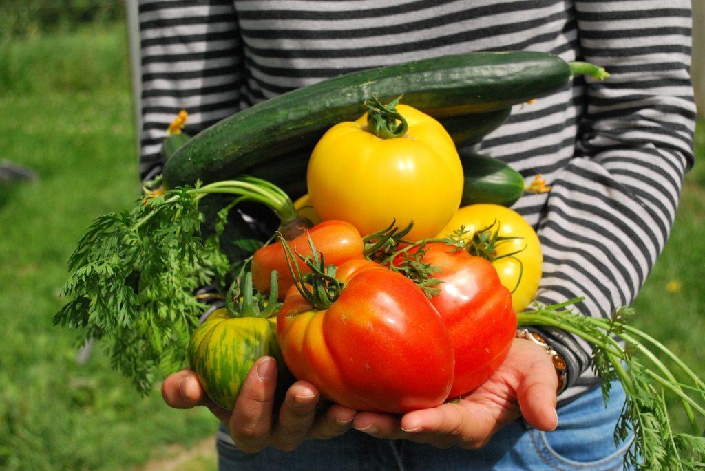 Gemüse Ernte Gewächshaus Garten Gärtner Tomaten Zucchini